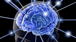 20150120-224452-free-brain-picture.jpg